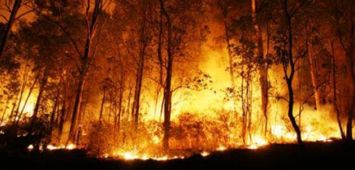 Penanggulangan Krisis Kesehatan Akibat Kebakaran Hutan dan Lahan