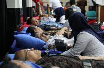 pendonoran-darah